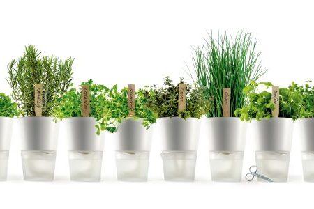 Le proprietà curative e le virtù delle erbe aromatiche che usiamo quotidianamente in cucina.