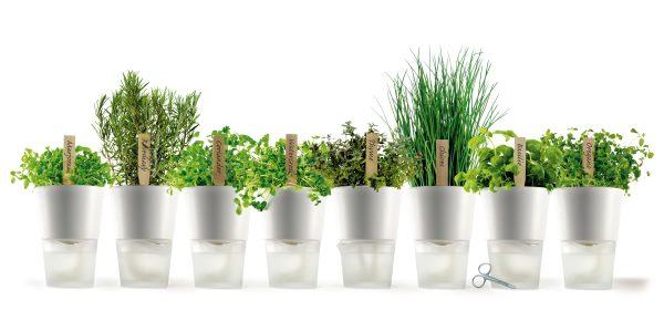 Erbe aromatiche, virtù e proprietà curative