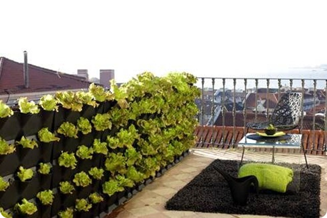 ortaggi-da-seminare-sul-balcone-a-primavera2