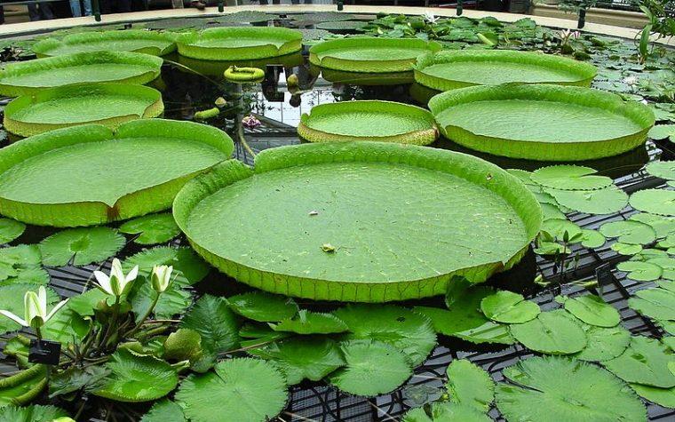 Sbocciano i fiori, quelli del Giardino Botanico di Londra.