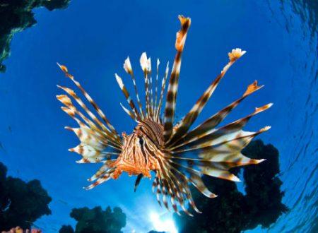Giornata Mondiale degli Oceani per celebrare e tutelare le distese d'acqua nel mondo.