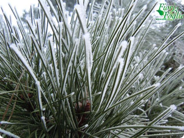 piante_ghiaccio