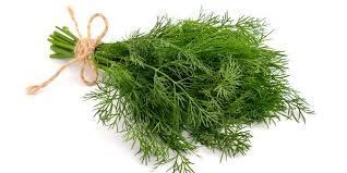 L'aneto è un'erba aromatica dal profumo fresco e delicato, dalle interessanti proprietà.