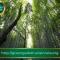 Il bosco è per l'uomo un bene prezioso ed indispensabile che si deve proteggere e tutelare.