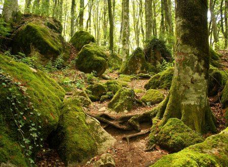 La scienza della vita e le connessioni nascoste tra natura e biodiversità (1a parte).